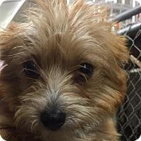 Adopt A Pet :: Rory - Aurora, CO