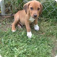 Adopt A Pet :: Monroe, adorable and calm baby - Snohomish, WA