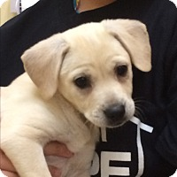 Adopt A Pet :: Austria - Thousand Oaks, CA