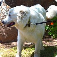 Adopt A Pet :: Wren - Penngrove, CA