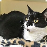 Adopt A Pet :: Drizella - Salisbury, MA