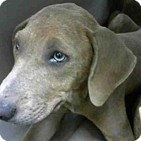 Adopt A Pet :: LITTLE FOOT - Conroe, TX