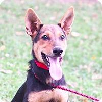 Adopt A Pet :: Sandy - San Ramon, CA