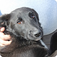 Adopt A Pet :: Chatty Cathy - Harmony, Glocester, RI