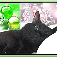Adopt A Pet :: Biscuit - Harrisburg, NC