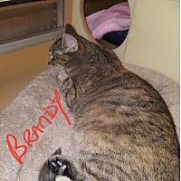 Adopt A Pet :: Brandy - Gainesville, VA