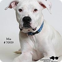 Adopt A Pet :: Mia  (Foster Care) - Baton Rouge, LA