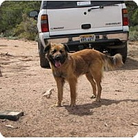 Adopt A Pet :: Shealon - Roosevelt, UT