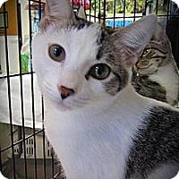 Adopt A Pet :: Franklin - Seminole, FL