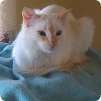 Adopt A Pet :: Brule' - Prescott, AZ
