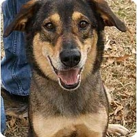 Adopt A Pet :: Jethro Foster Needed! - kennebunkport, ME