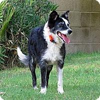 Adopt A Pet :: PAXXTON - Phoenix, AZ