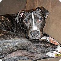 Adopt A Pet :: Ferguson - Roaring Spring, PA