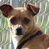 Adopt A Pet :: Frankie - Meridian, ID