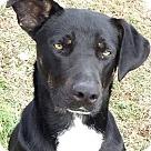 Adopt A Pet :: Bradley (MRHSF)
