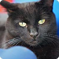 Adopt A Pet :: Luna - Tucson, AZ
