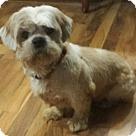 Adopt A Pet :: Earl