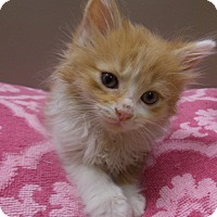 Adopt A Pet :: Hamilton - Delmont, PA