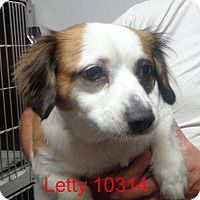 Adopt A Pet :: Letty - baltimore, MD
