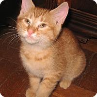 Adopt A Pet :: Clarissa - Colmar, PA