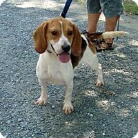 Adopt A Pet :: Tracker - Dumfries, VA