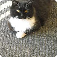 Adopt A Pet :: Nevada - Riverside, RI