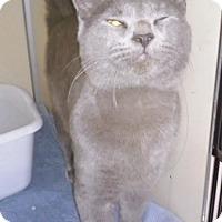 Adopt A Pet :: Zedekiah - Franklin, NH