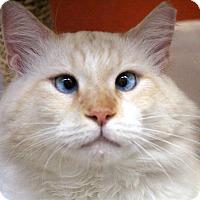 Adopt A Pet :: Berman - Sarasota, FL