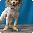 Adopt A Pet :: Lexus
