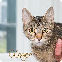 Adopt A Pet :: Ginger - Somerset, PA