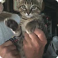 Adopt A Pet :: Benny - Caro, MI