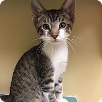 Adopt A Pet :: Sunny - Maryville, MO