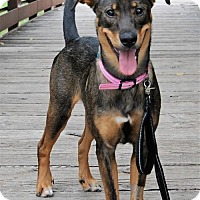 Adopt A Pet :: Stella - McKinney, TX
