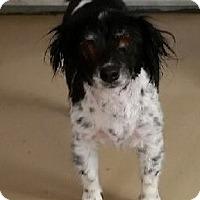 Adopt A Pet :: Sissy - Yreka, CA