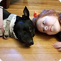 Adopt A Pet :: Darla - Memphis, TN
