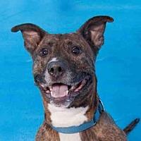 German Shepherd Dog Mix Dog for adoption in Hampton Bays, New York - PUP STAR
