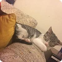 Adopt A Pet :: Alba - Philadelphia, PA