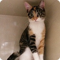 Adopt A Pet :: Brittany - Berkeley Hts, NJ