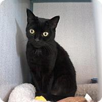 Adopt A Pet :: Disney - Kinston, NC