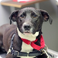 Adopt A Pet :: Nemo - Mount Laurel, NJ