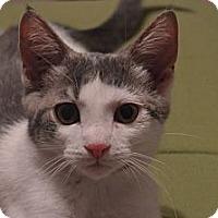 Adopt A Pet :: Spartacus - Milford, MI