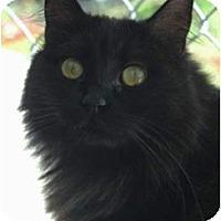 Adopt A Pet :: Venus - El Cajon, CA