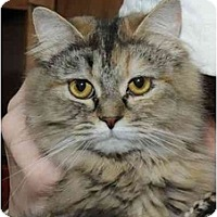 Adopt A Pet :: Arcadia - Columbus, OH