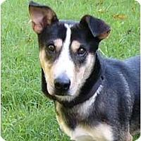 Adopt A Pet :: Dexter - Mocksville, NC