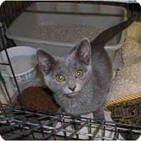 Adopt A Pet :: Uku - Davis, CA
