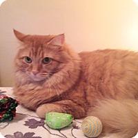 Adopt A Pet :: Patsy - Colmar, PA