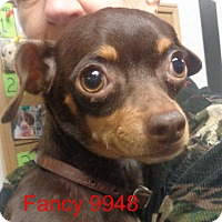 Adopt A Pet :: Fancy - baltimore, MD