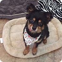 Adopt A Pet :: JuBee - Conroe, TX