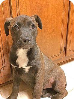 Retriever (Unknown Type) Mix Dog for adoption in Loganville, Georgia - Jingle