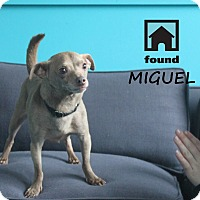 Adopt A Pet :: Miguel - Chicago, IL